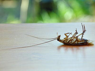 Инсектициди
